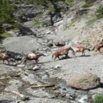 colorado-outfitters-crossing-stream